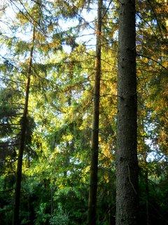 FOTKA - Večer v lese 7