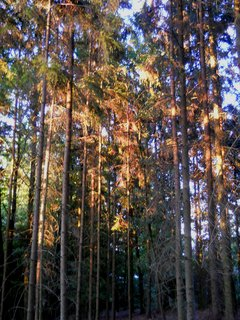 FOTKA - Večer v lese 8