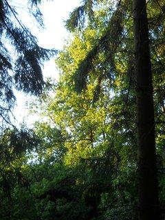 FOTKA - Večer v lese 9
