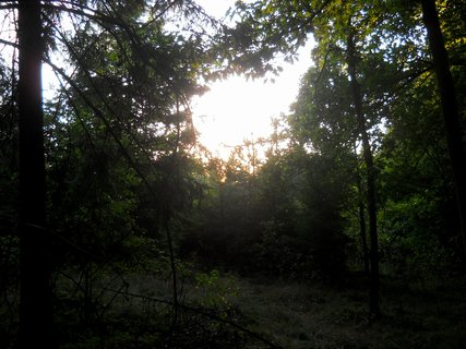FOTKA - Večer v lese 10