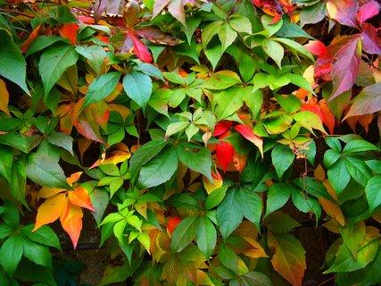 FOTKA - procházka 25.9.2012, podzim zdobí zídku...
