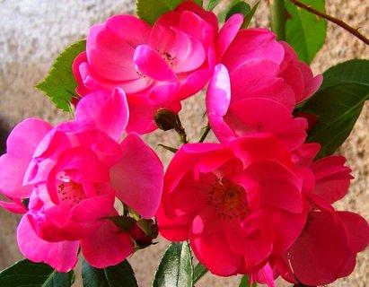 FOTKA - 25.9.2012, květy plně rozvité..