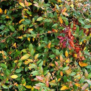 FOTKA - 26.9.2012, podzimní barvy kolem nás ...