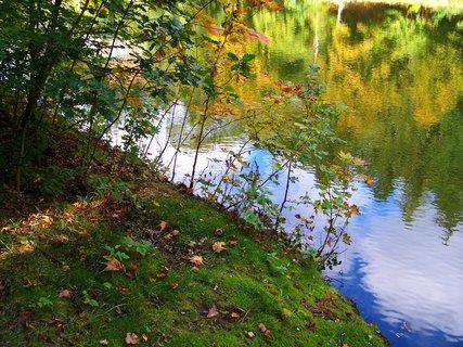 FOTKA - procházka 28.9.2012, Dolnomlýnský rybník, u břehu...
