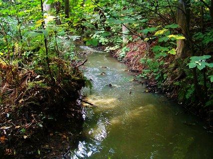 FOTKA - procházka 28.9.2012,  Kunratický potok v lese..