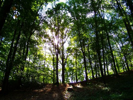 FOTKA - procházka 28.9.2012, výstup do horní části lesa