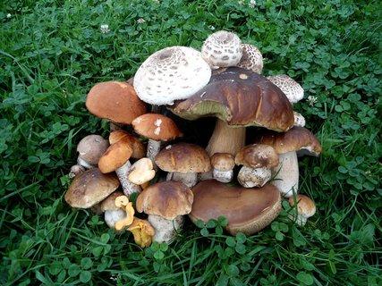 FOTKA - Nasbírané houby v trávníku