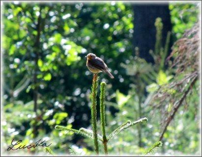 FOTKA - Ptáček na vrcholu stromku