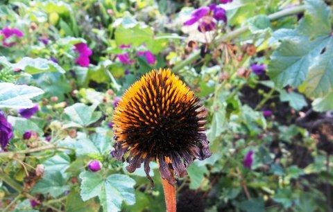 FOTKA - podzim barví