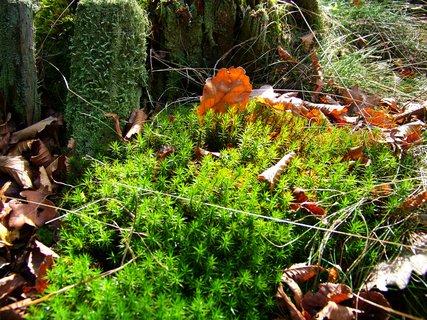 FOTKA - včerejší procházka lesem, to je barev..