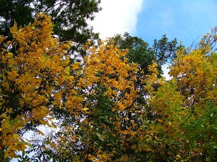 FOTKA - cestou z lesa, stromy se barví..