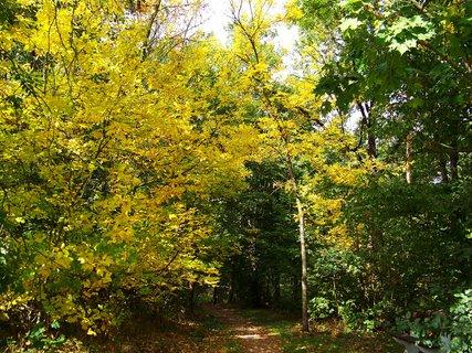 FOTKA - hlavní cesta do lesa...