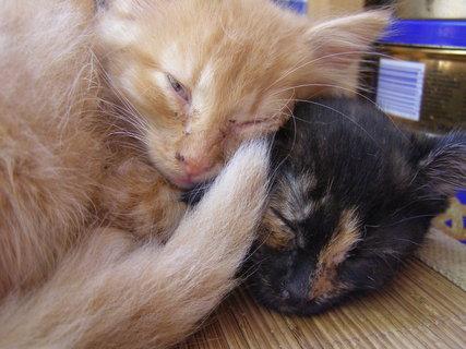 FOTKA - sourozenci při spánku