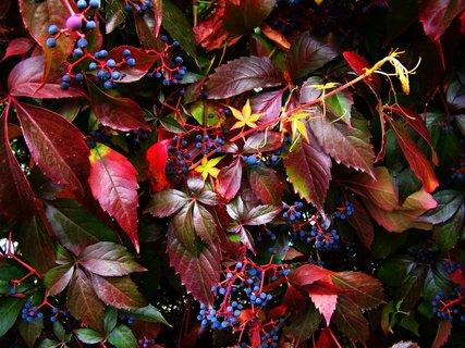 FOTKA - podzimní barvy cestou domů...