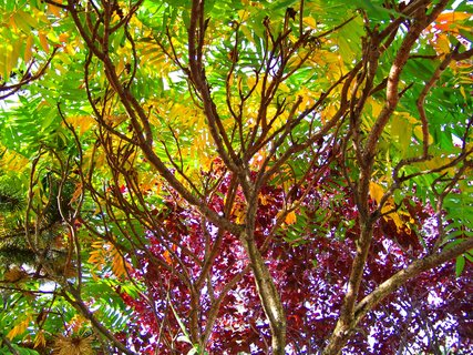 FOTKA - barevné stromy v zahradě..