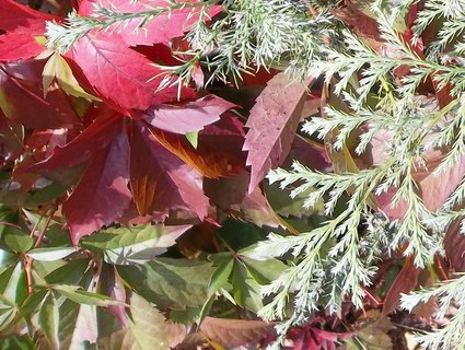 FOTKA - Podzim barví..