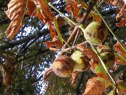 FOTKA - Podzim. .