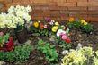 Květiny,flora