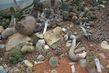Hodně kasktusů