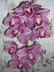 Orchidea7.