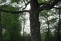 Stromovej obr