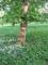 Strom na rozkvetlé louce