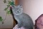 Kočička Lívinka