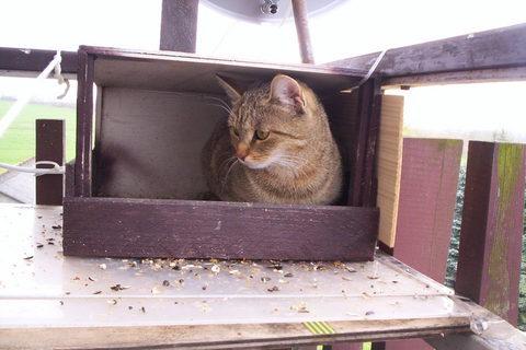 FOTKA - Kočka na čekané