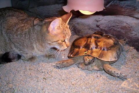 FOTKA - Kočka a želva