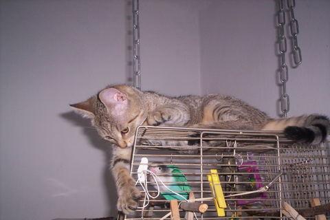 FOTKA - Papoušek a kočka