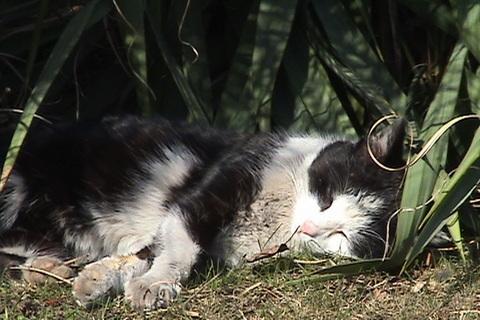 FOTKA - odpoledn� siesta