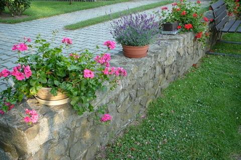 FOTKA - Naše zídka s květinkami:)