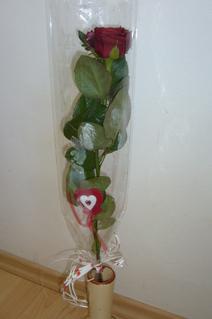 FOTKA - Růžička od Danečka