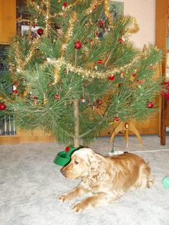 FOTKA - Vánoce našeho miláčka,,