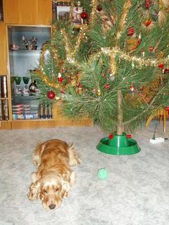 FOTKA - Vánoce našeho miláčka