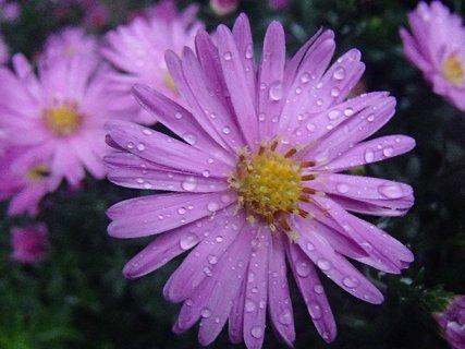 FOTKA - kvapky dažďa.