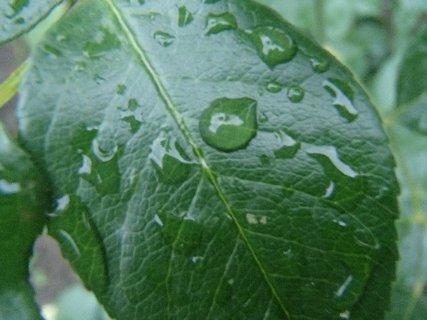 FOTKA - kvapky dažďa na liste