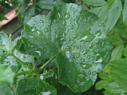 FOTKA - listy po daždi