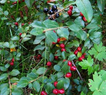 FOTKA - podzimní keře..,,