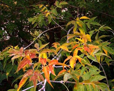 FOTKA - barevné stromy..