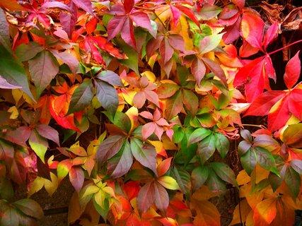 FOTKA - zídku zdobí podzim....