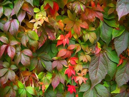 FOTKA - krása podzimu .,,,