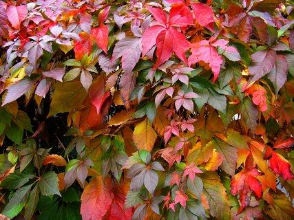 FOTKA - krása podzimních barev..