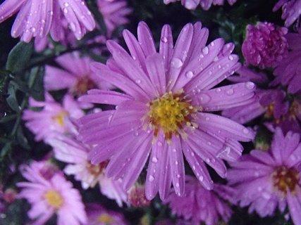 FOTKA - drobné kvietky a kvapky dažďa