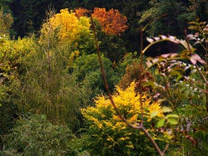 FOTKA - pohled na Krčský les