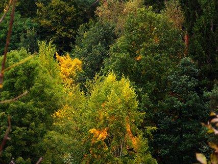 FOTKA - pohled na Krčský les 2