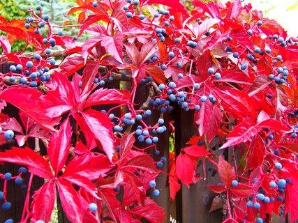 FOTKA - krása podzimu než se ztratí...