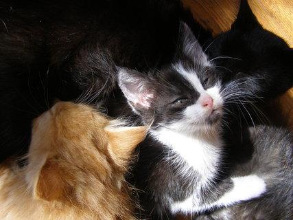 FOTKA - kočky.
