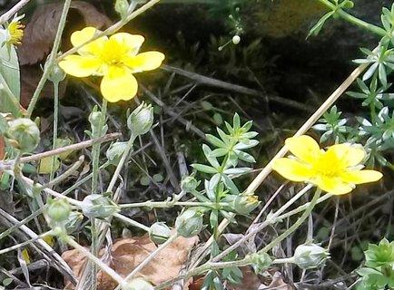 FOTKA - žlutá kvítečka