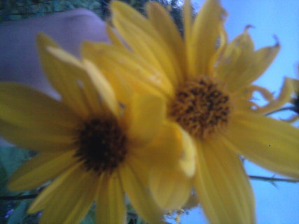 FOTKA - žlutá kvítka,